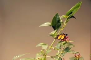AudubonInsectarium